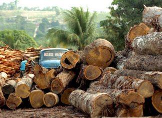 Αποψίλωση των δασών στη Βραζιλία