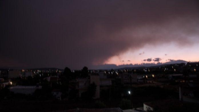 Πυκνοί καπνοί από την φωτιά στο πευκόδασος Natura στην Εύβοια